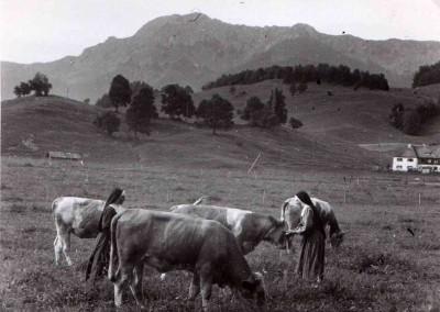 Schwestern mit Kühen
