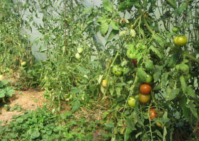 Gartenbau_02