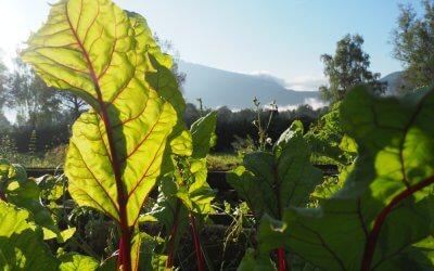 Gemüsegärtner/in gesucht … und gefunden!