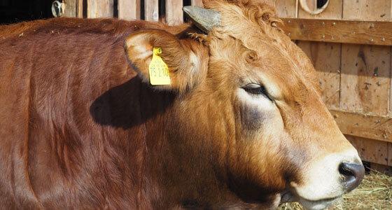 Frisches Lamm- und Rindfleisch