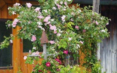Gartenpracht