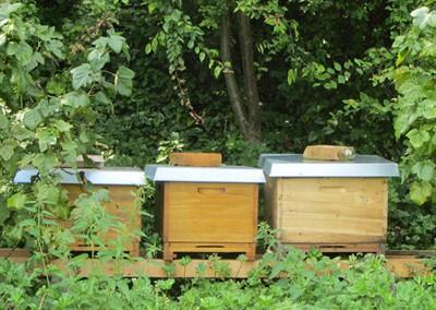 Bienenkaesten1