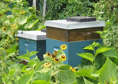Bienenkaesten2
