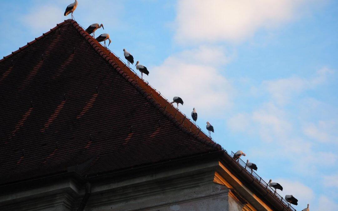 Störche auf dem Kloster