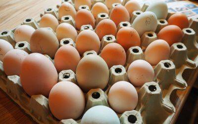 Erste Eier von unseren Hühnern