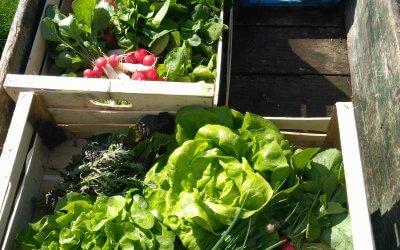 Gemüseverkauf direkt aus dem Garten