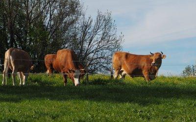 Unsere Kühe sind wieder da!