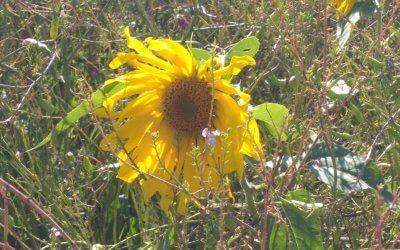 Blühwiese im August