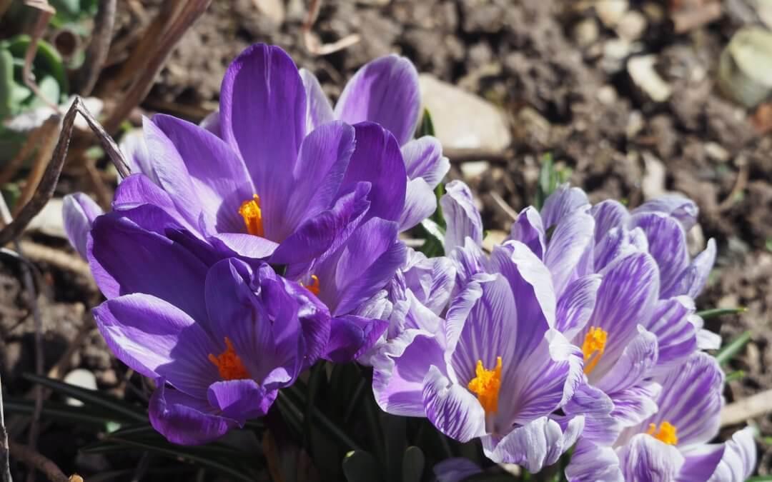 Frühlingsbotinnen