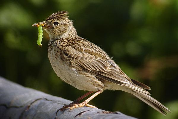 Schutz für bedrohte Vogelarten