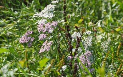 Die Blühwiese im August
